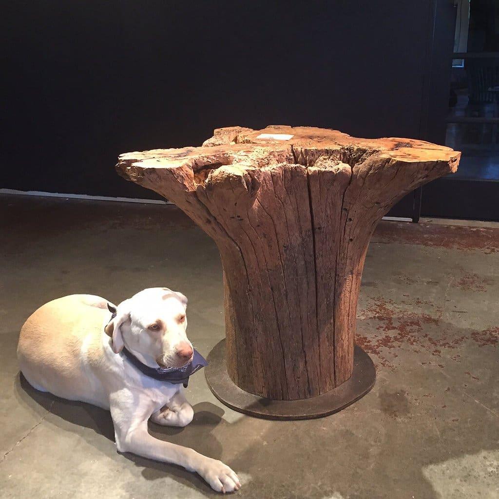 rescued pecan root